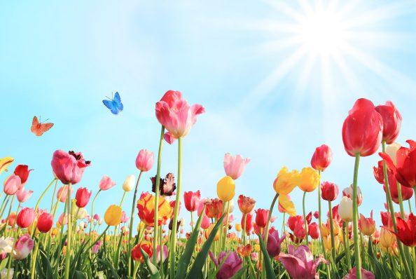 Afbeeldingsresultaat voor voorjaar